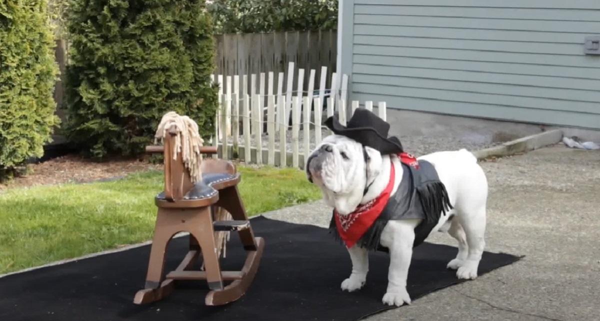 cucciolo cane cavallo