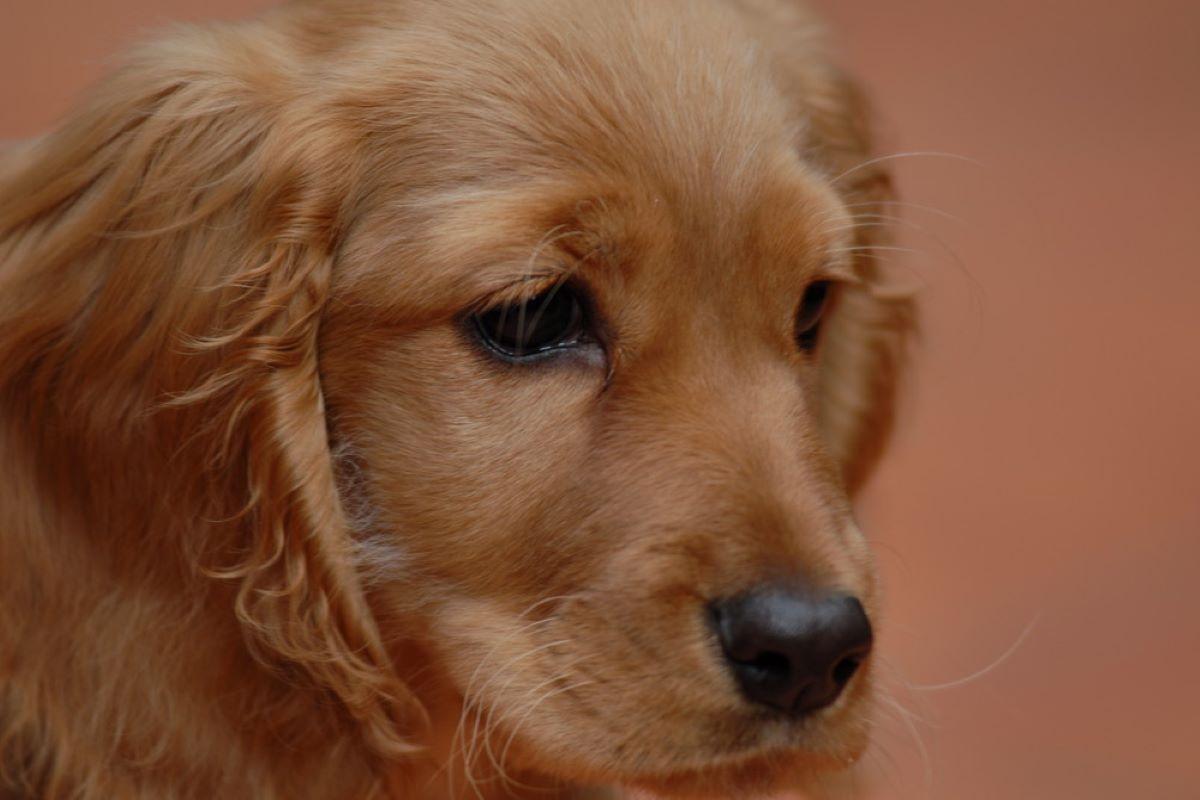il cucciolo di cane può avere dei brutti ricordi
