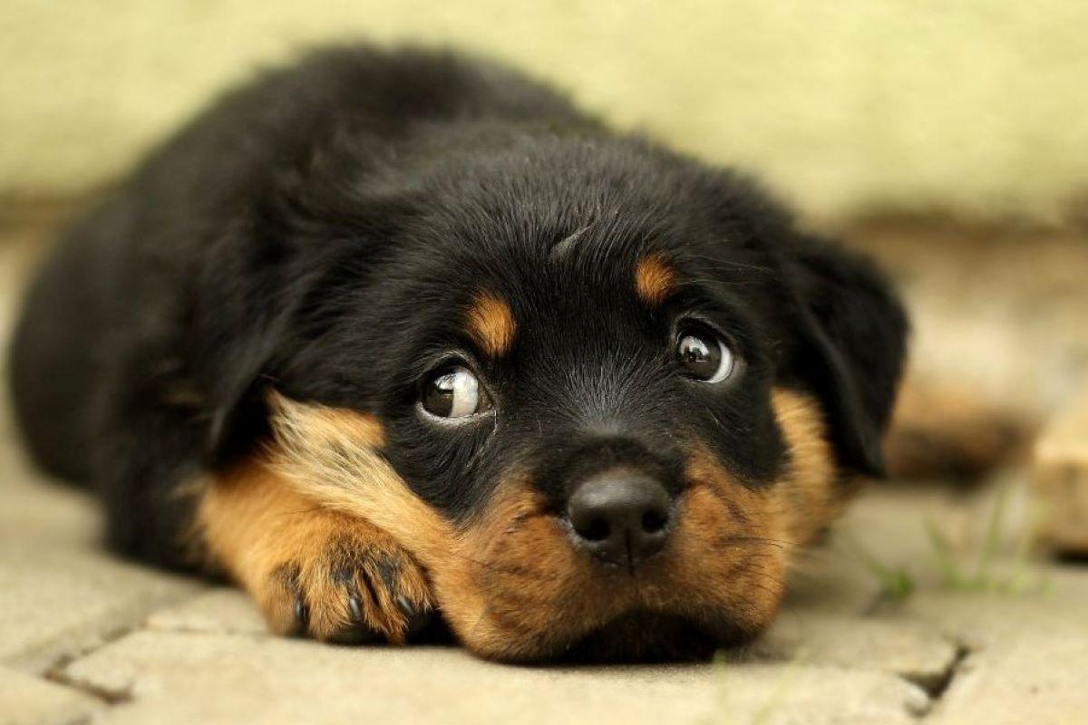 il cucciolo di cane può avere brutti ricordi