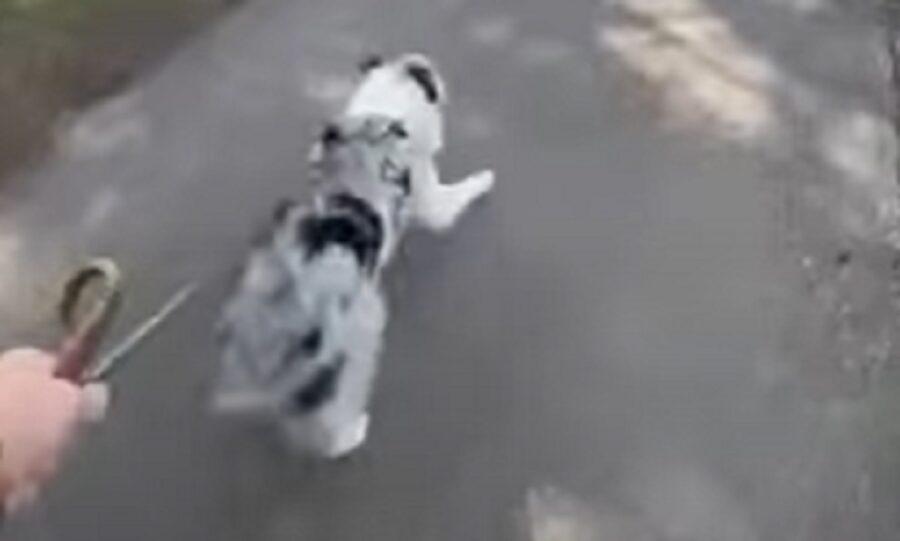 cucciolo gioia parco