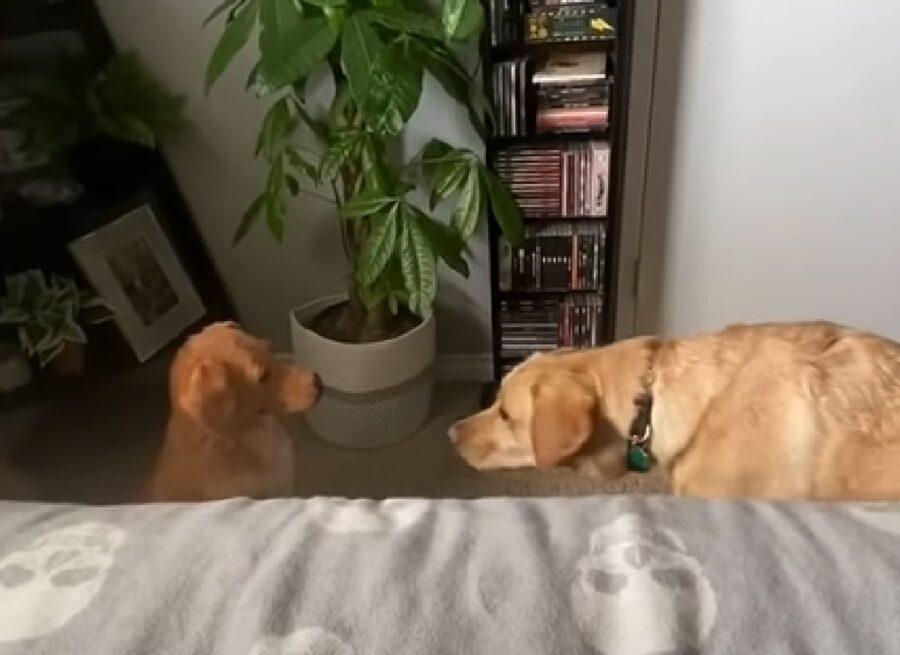 duke cucciolo labrador mamma pensiero statua