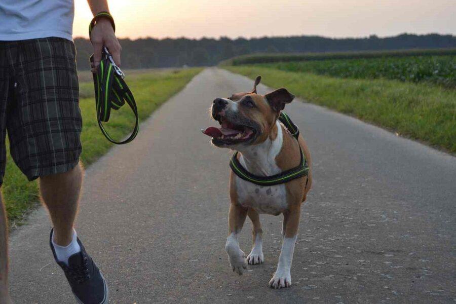 cane va appresso al padrone