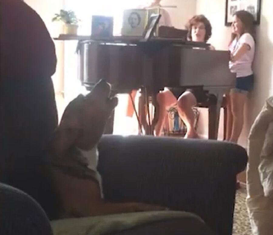 sadie cucciola beagle canto libero