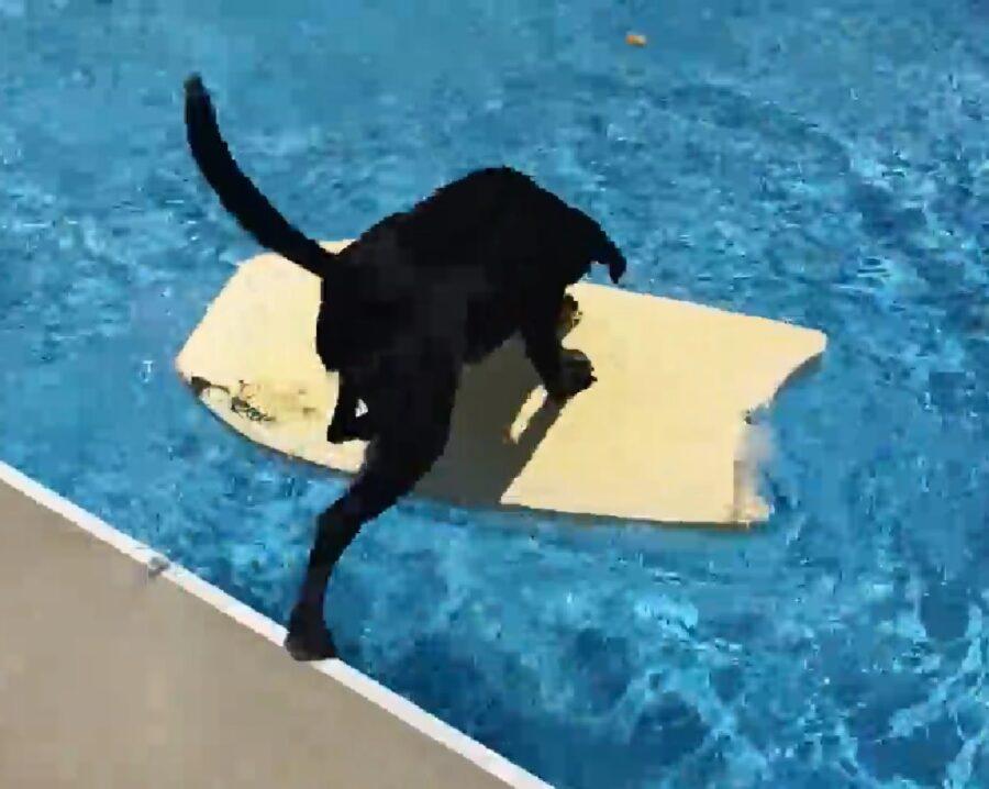 abby cucciola impara in fretta
