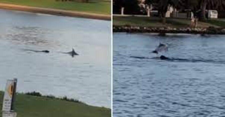 Un cucciolo di Labrador e un delfino nuotano e giocano insieme (VIDEO)