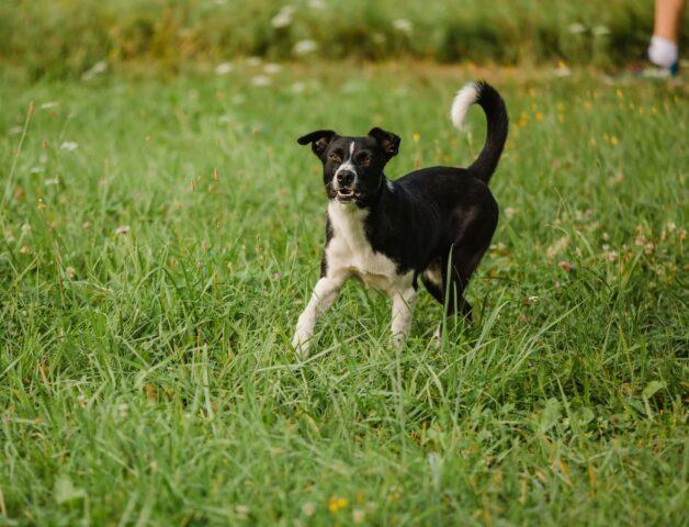 cucciolo corre libero al parco