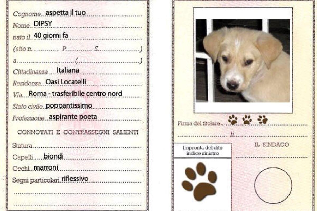 documento cane