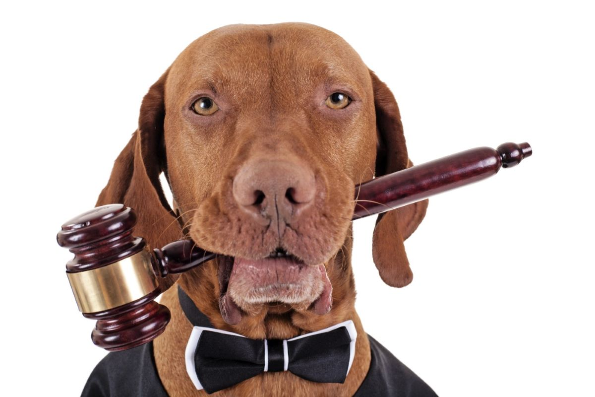 cane avvocato