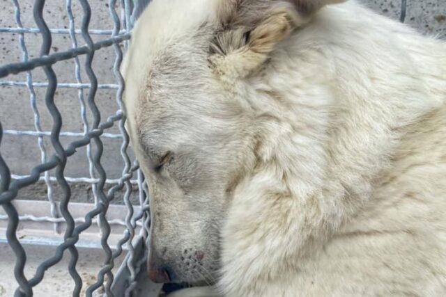 Lola il cane che ha smesso di credere in un futuro migliore