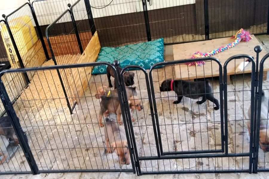 stanza per cani