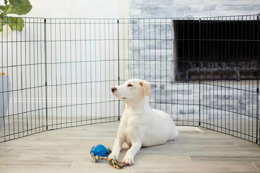 cane nel recinto