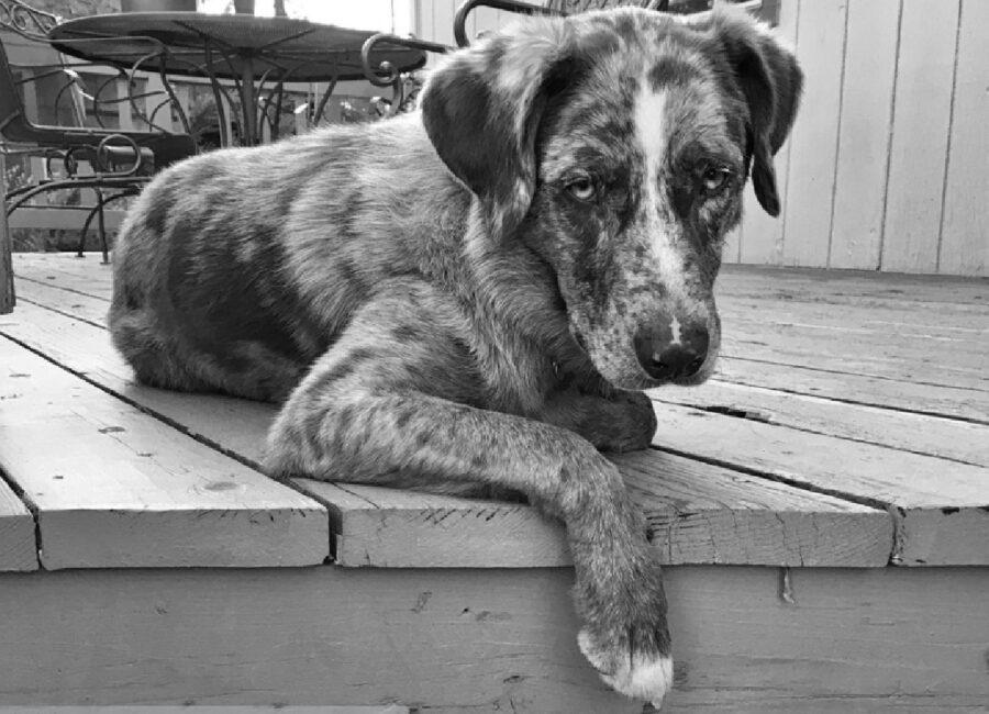 modena cane maltrattamento collare