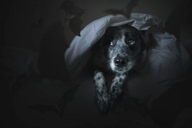 cane al buio