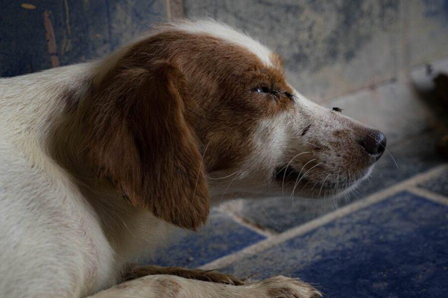 cane con problemi di vista