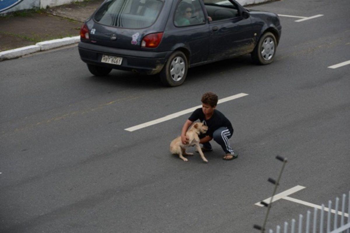 cucciolo di cane soccorso da un bambino