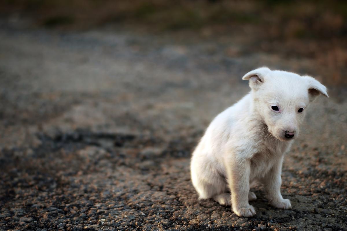 cucciolo di cane abbandonato per strada