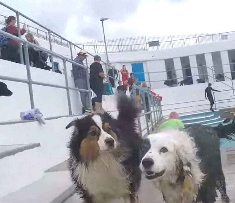 cuccioli cane evento video fantastico