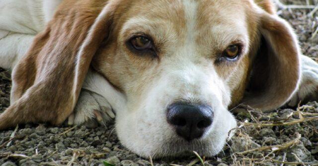 pozzuoli cane e proprietario salvati dopo caduta burrone