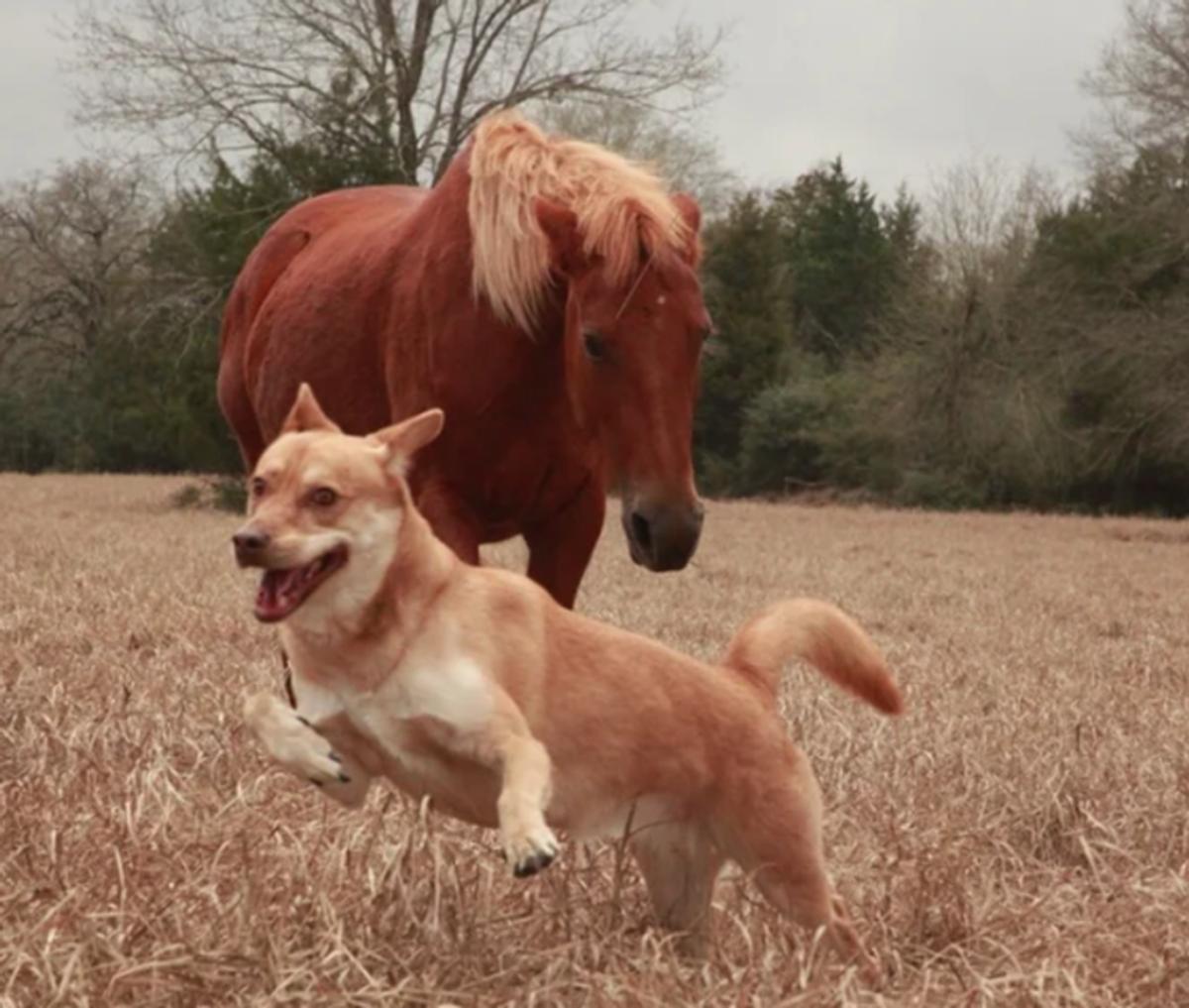 cane con cavallo