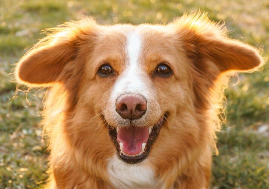 gioia cucciolo cane