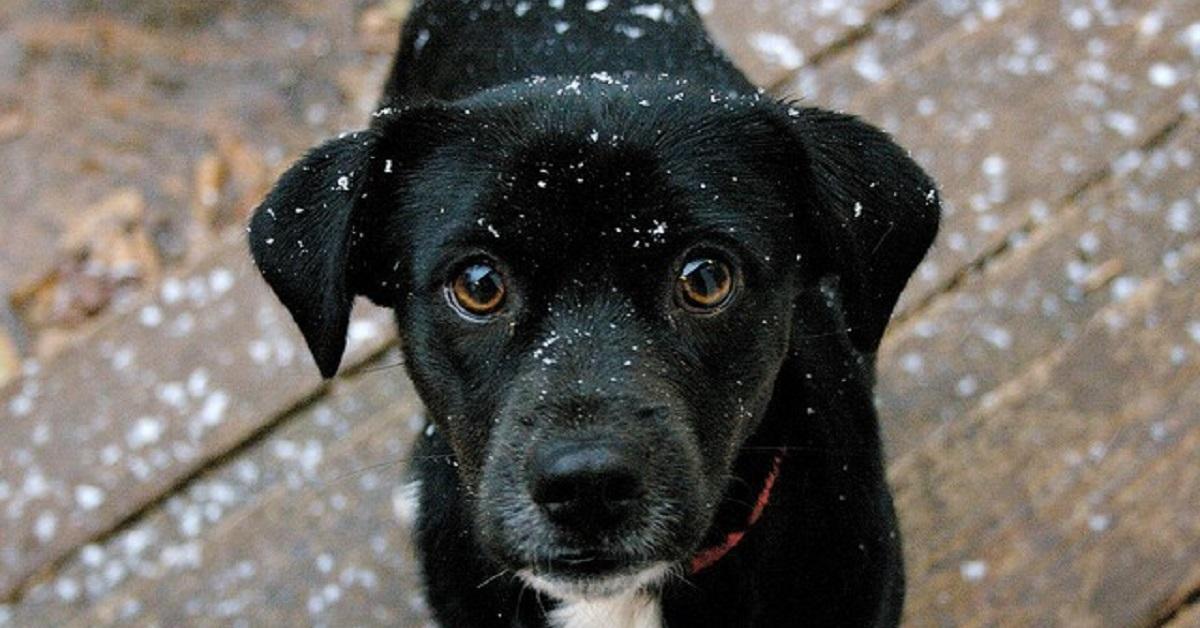 cane e neve