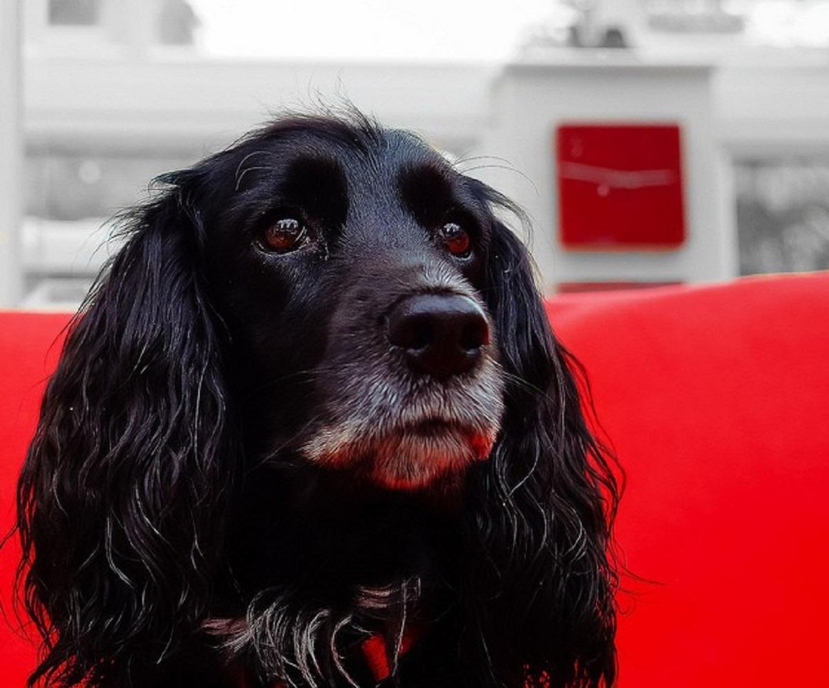promemoria sui cani-cagnolino sul rosso