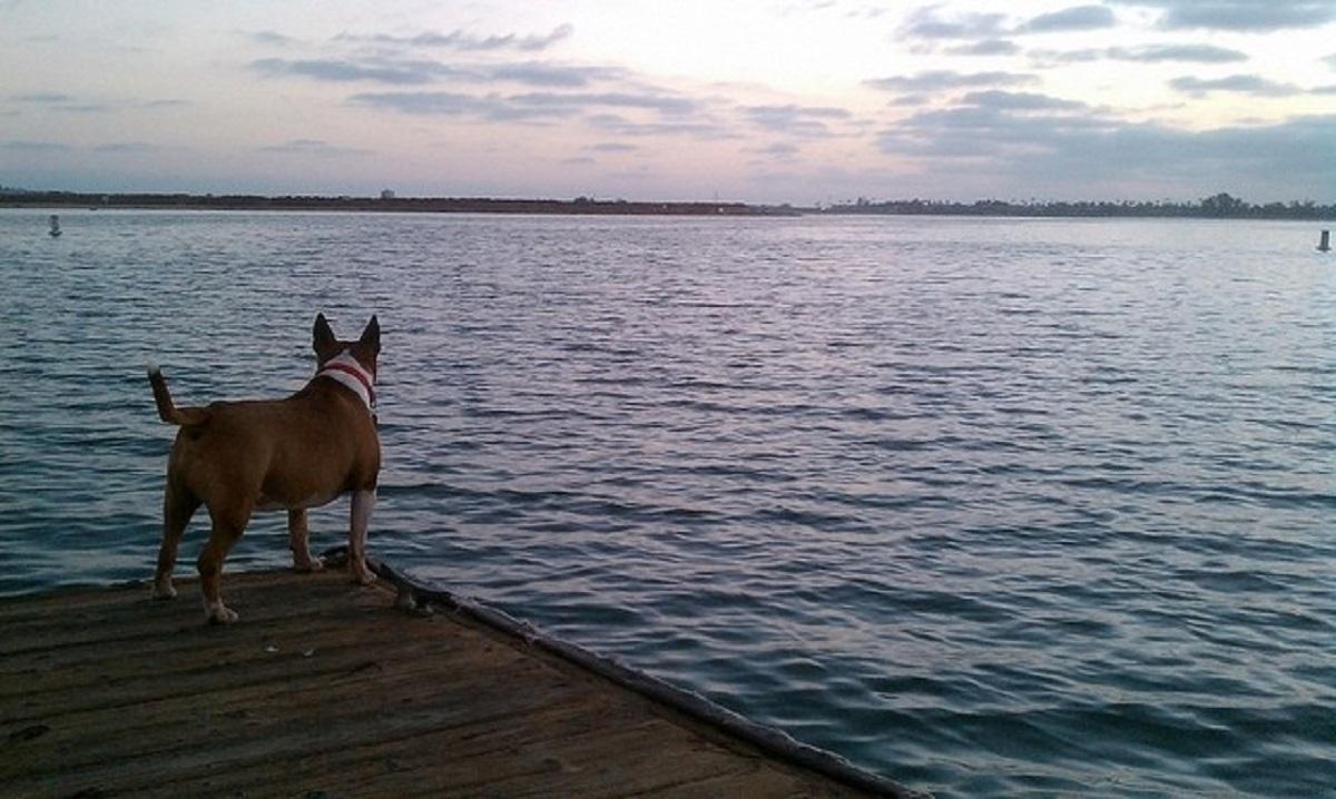 promemoria sui cani-cane e mare