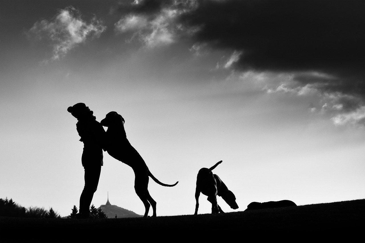 cane vuole bene a padroncino