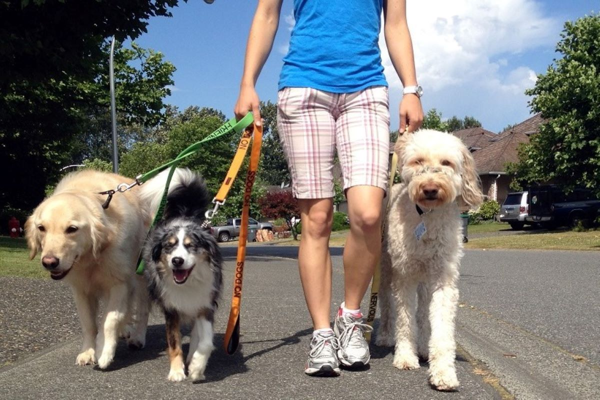 cani a spasso col dog sitter