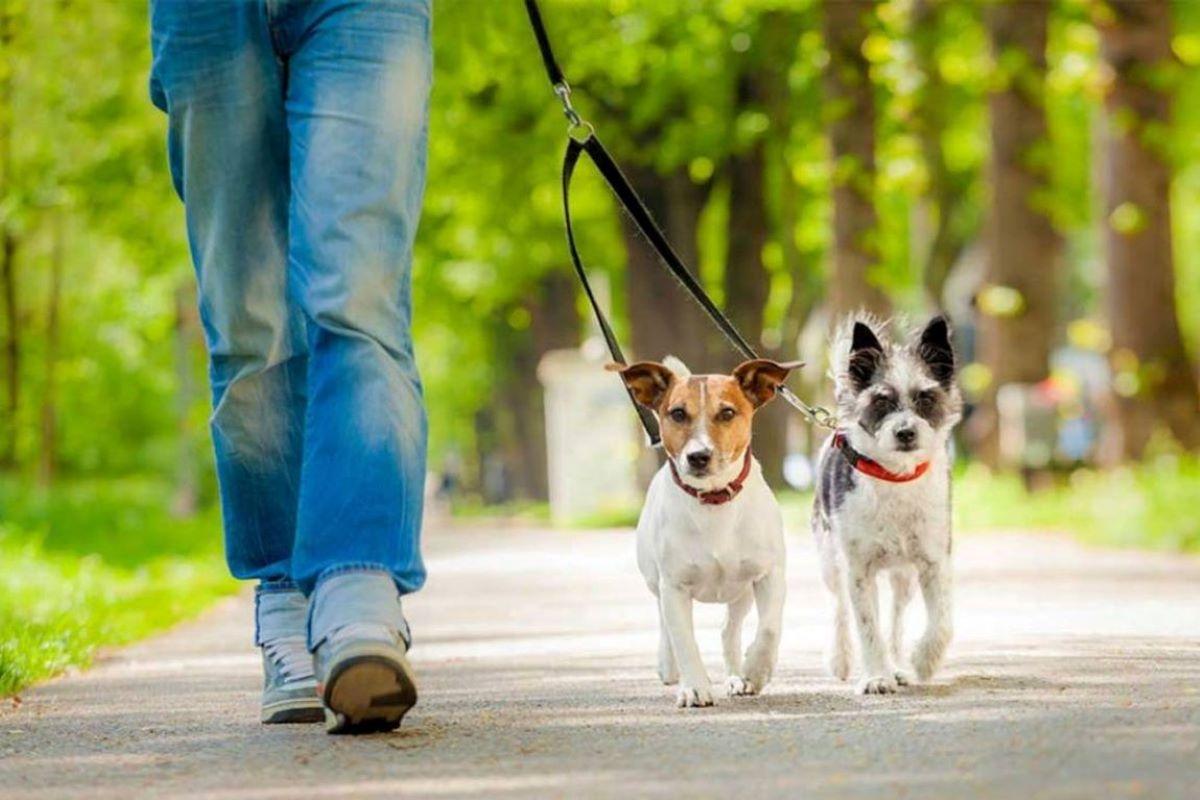 responsabilità civile sul cane