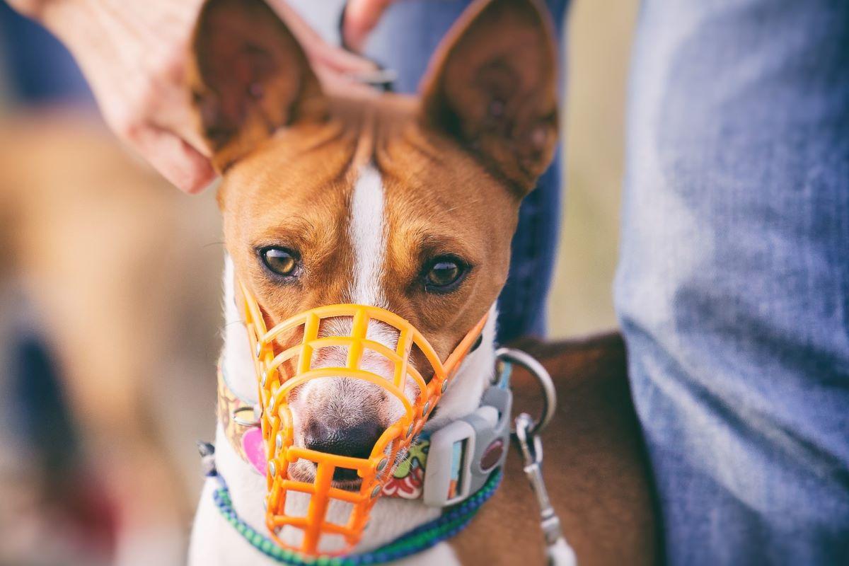 cucciolo di cane con la museruola