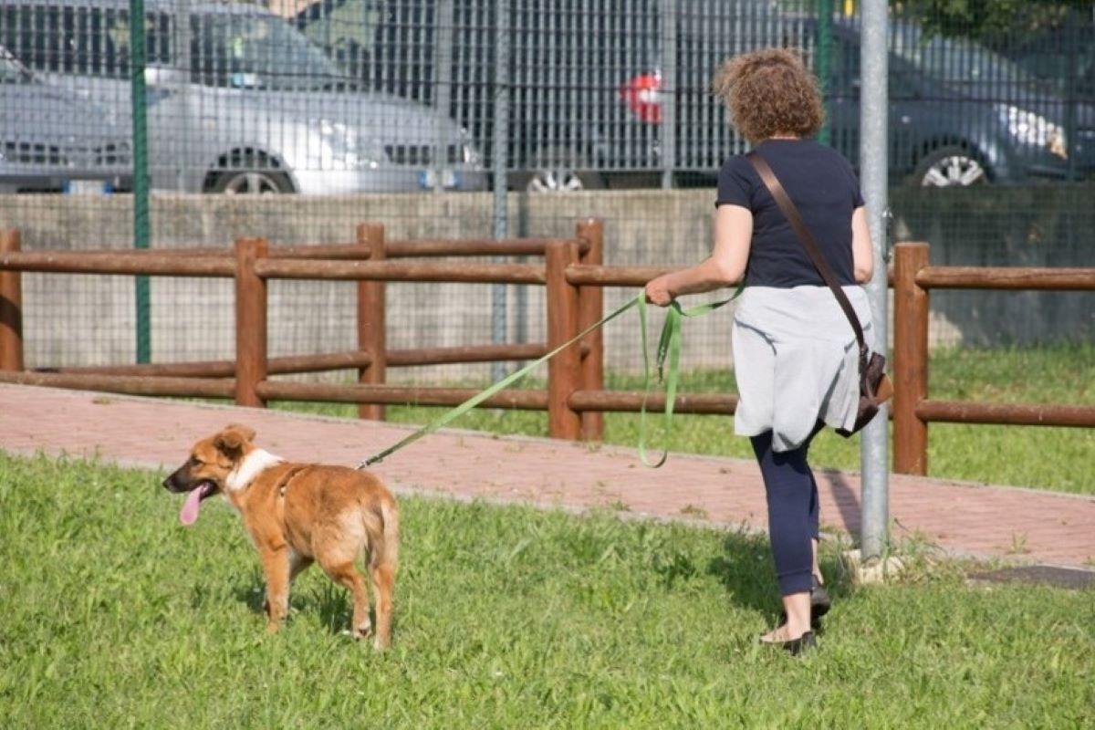 cane a spasso con la padrona
