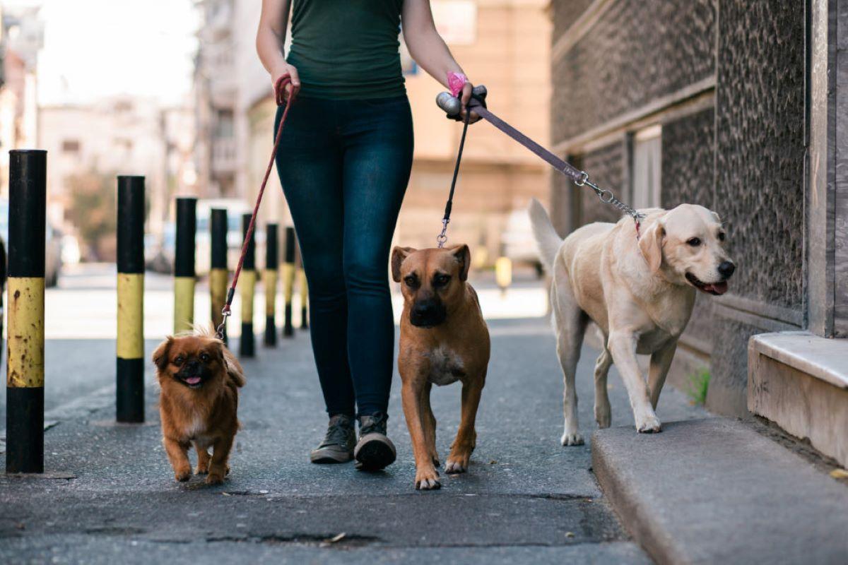 responsabilità penale sul cane