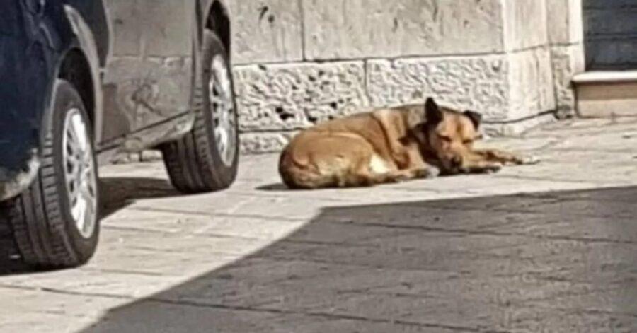 cane dorme per strada