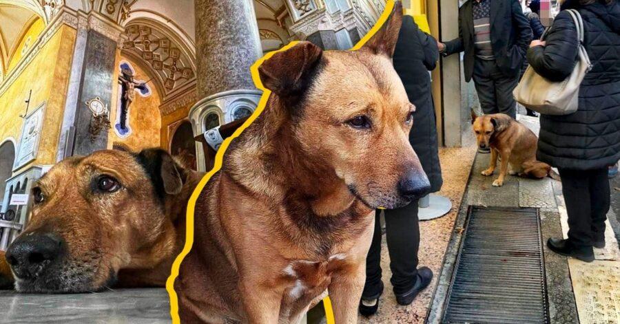 Cane adottato dalla comunità di Altamura