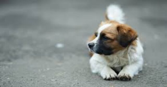 cucciolo seduto su strada