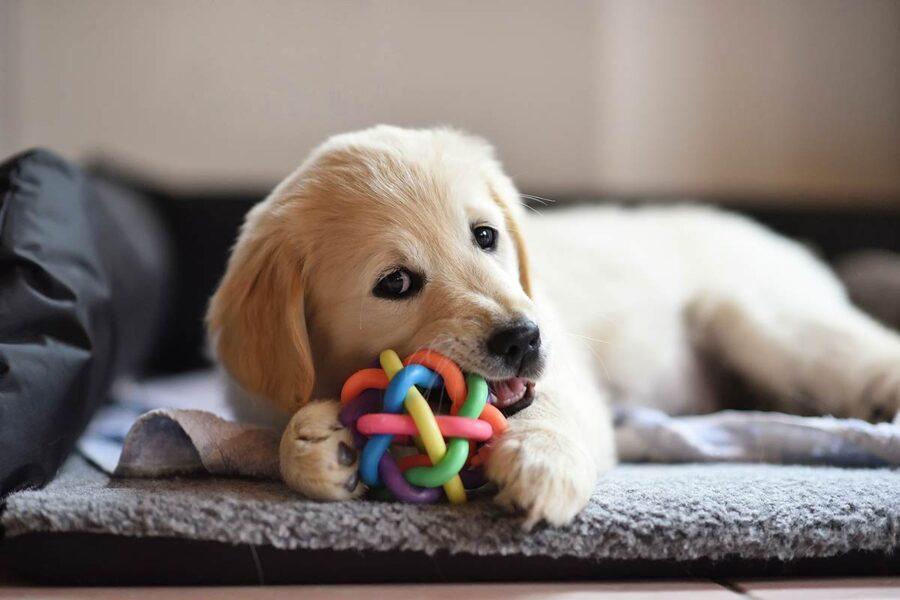 cane con pallina