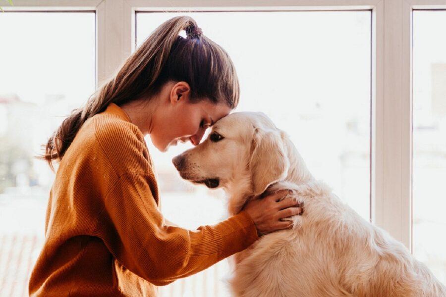 intesa tra cane e ragazza