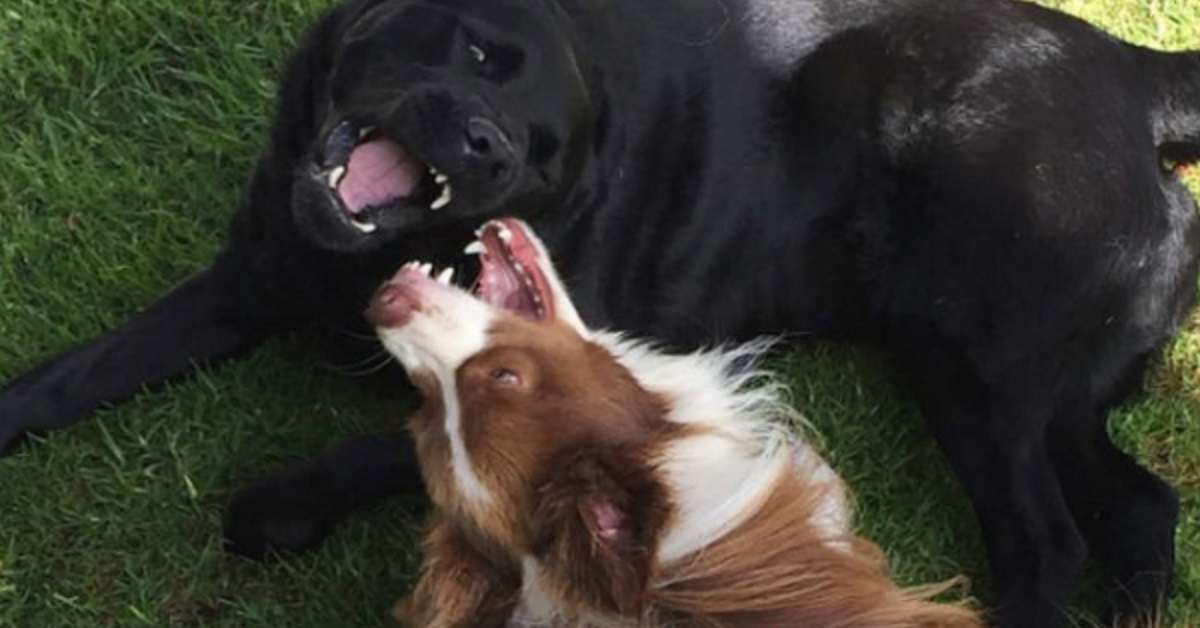 stereotipi sui cani- cani che si amano