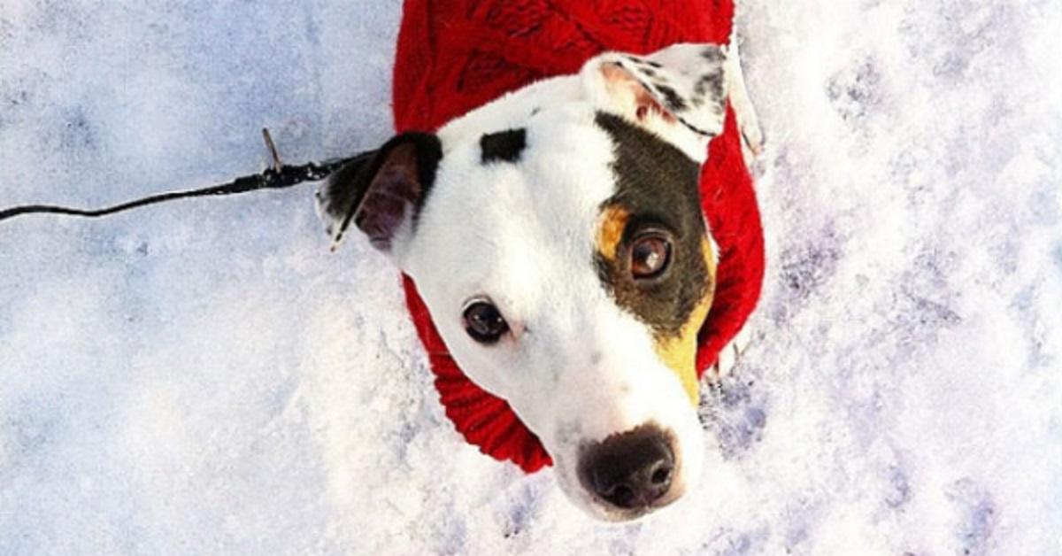 stereotipi sui cani-cane con cappotto