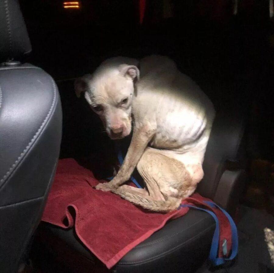 salva macchina cucciola