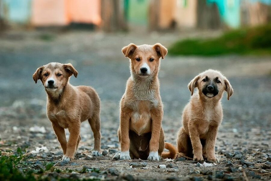 tre cani randagi