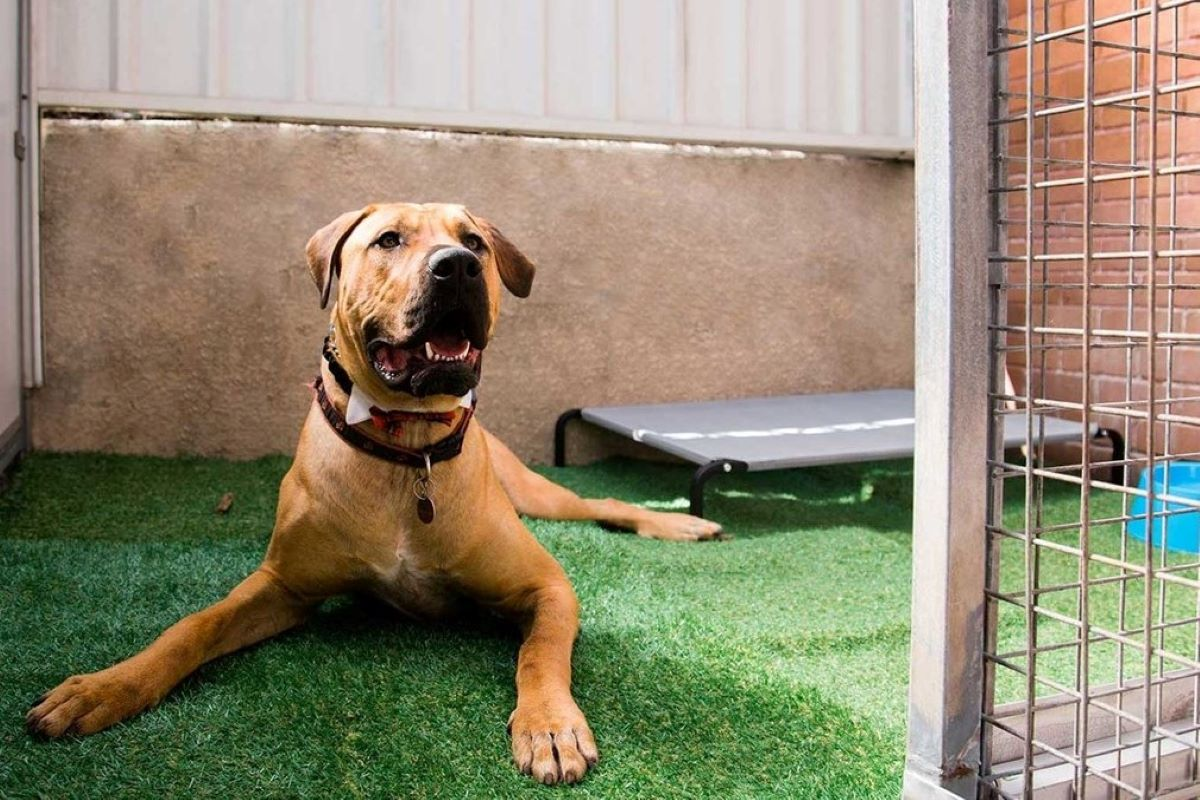 cane si rilassa in giardino