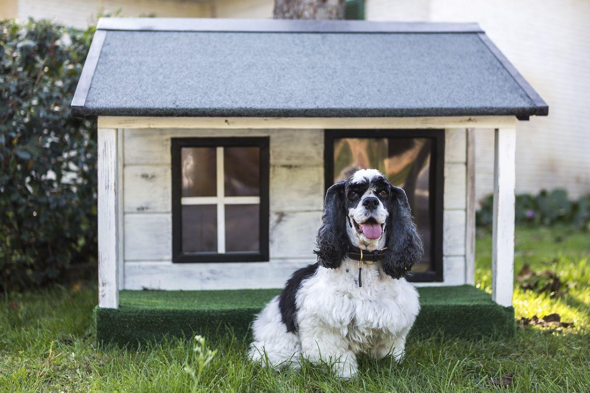 cagnolino in pensione