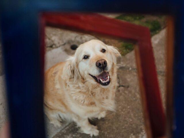 cane in giro sorride