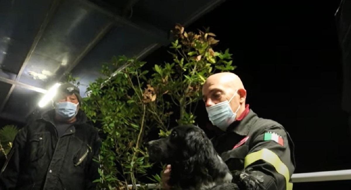Cucciolo di cane cade nel Po e viene salvato appena in tempo da un pescatore, il video