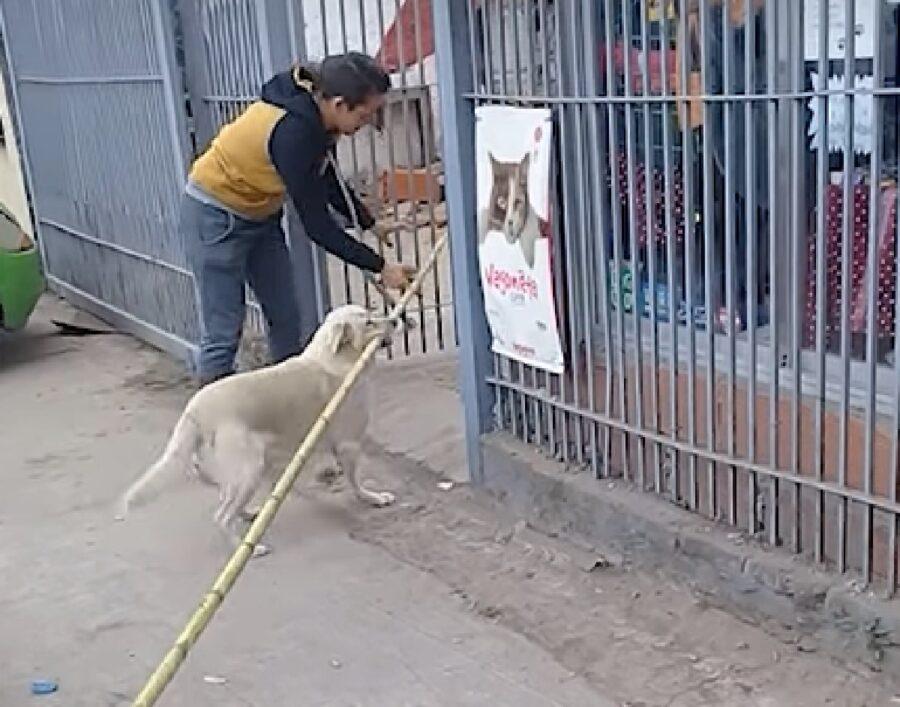 oki cucciolo labrador sfida impossibile