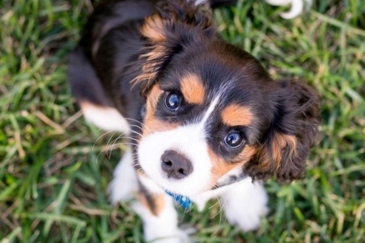 cucciolo di cane fissa l'obiettivo