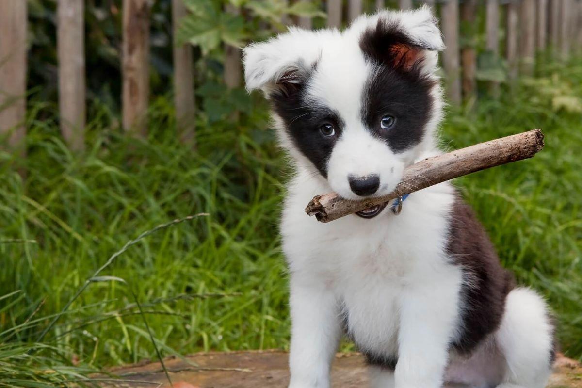 vendita del cane