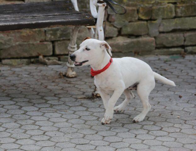 cucciolo di cane passeggia